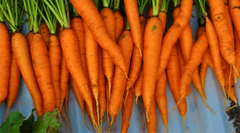 12 Top Benefits of Eating Carrots Daily