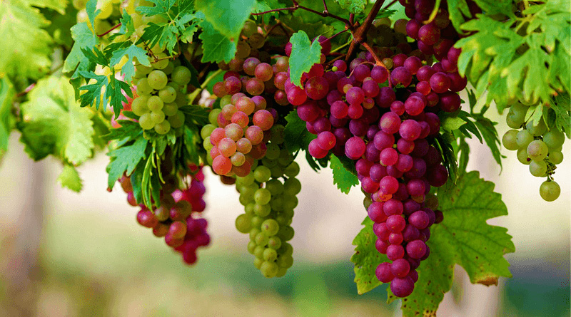 Amazing Properties of the Grapes