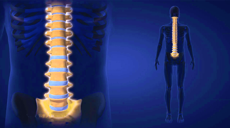 External And Microscopic Anatomy Of Human Spinal Cord Healthncure