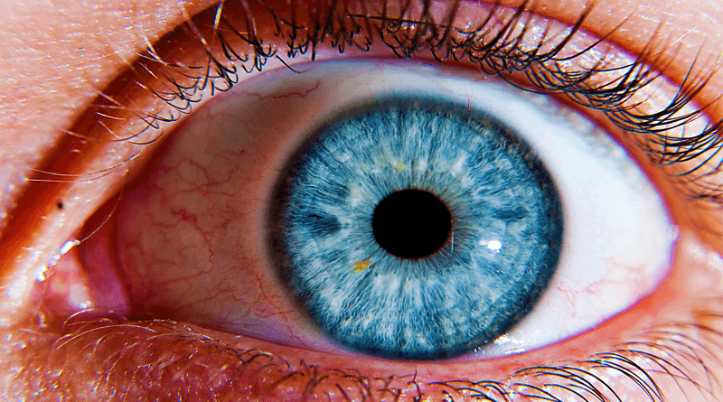 Structure And Function of Human Eye