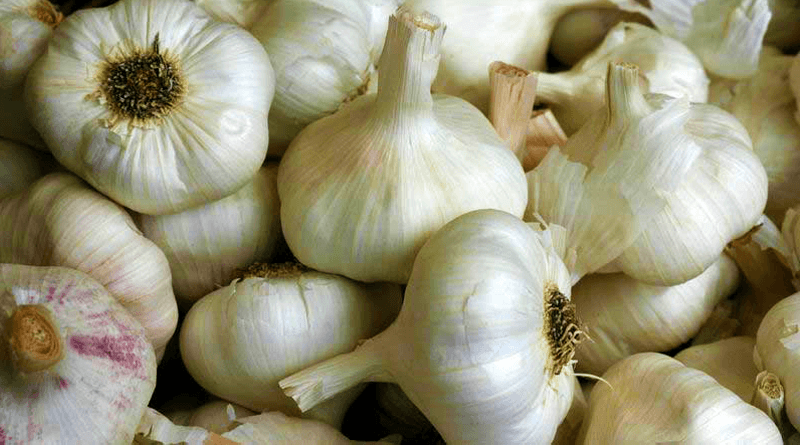 The Great Benefits of Garlic Fasting