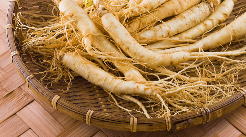 Medicinal Benefits of Herb Ginseng