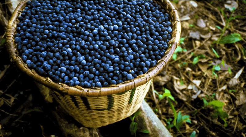 12 Health Benefits of Acai Berries