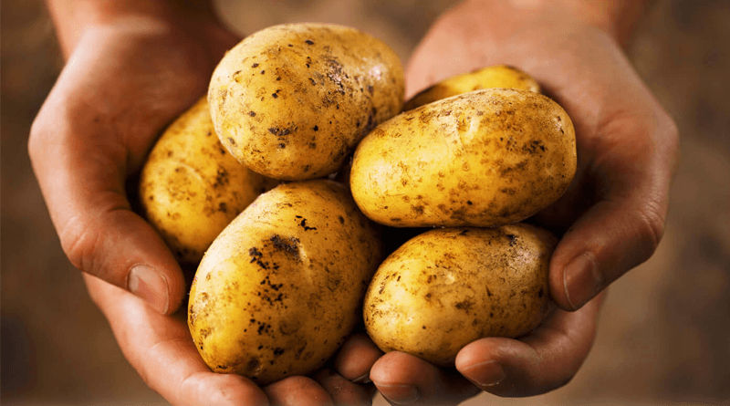 Nutritional and Health Benefits of Potato