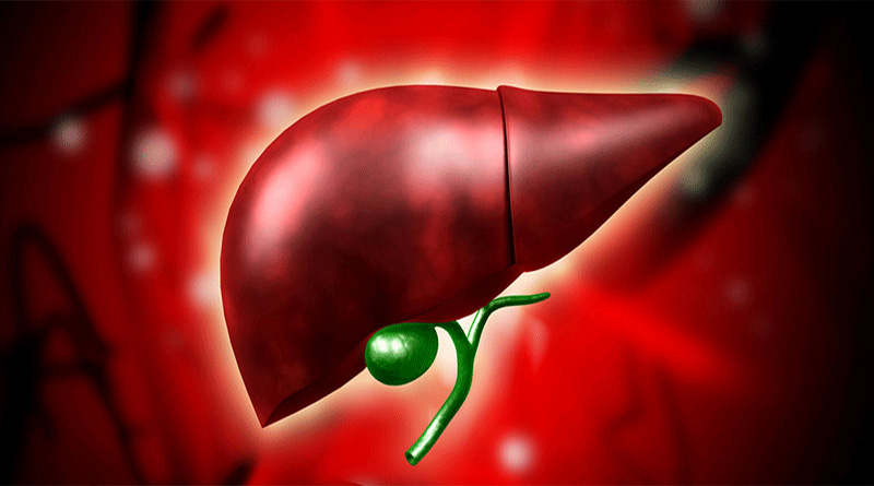 4 Medicinal Plants that help Detoxify the Liver