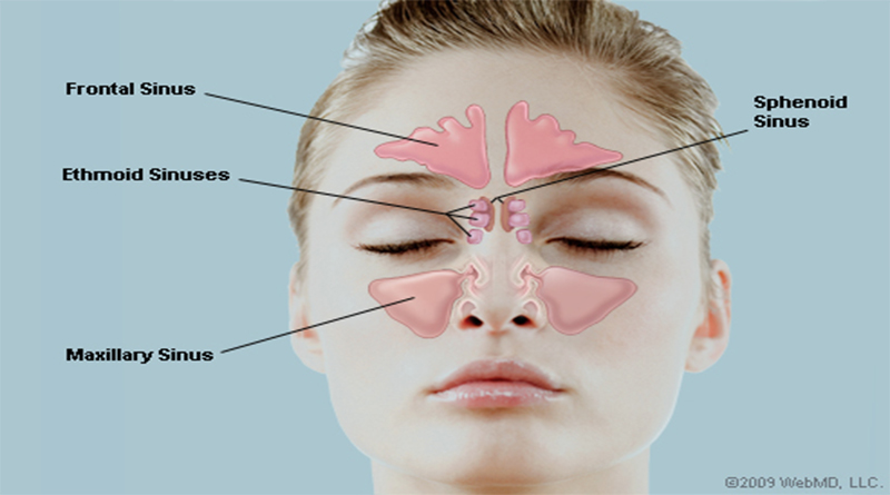 Anatomy and structure of the Human Nose | HealthnCure.org