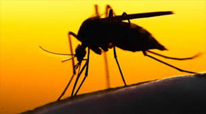 Some tips to avoid mosquito bites in summer