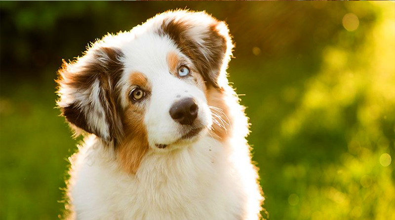 10 essential tips to take good care of your dogs