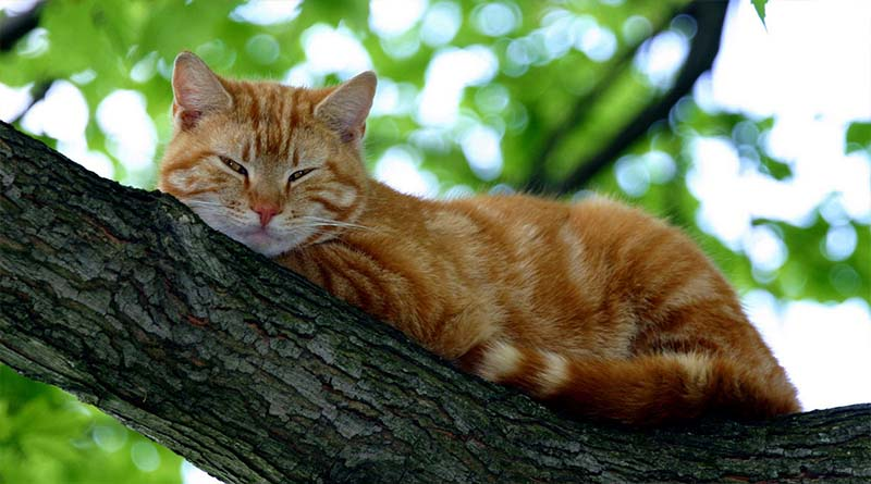 5 great myths about felled cats