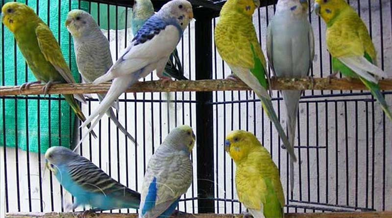 Basic rules for caring for a parakeet
