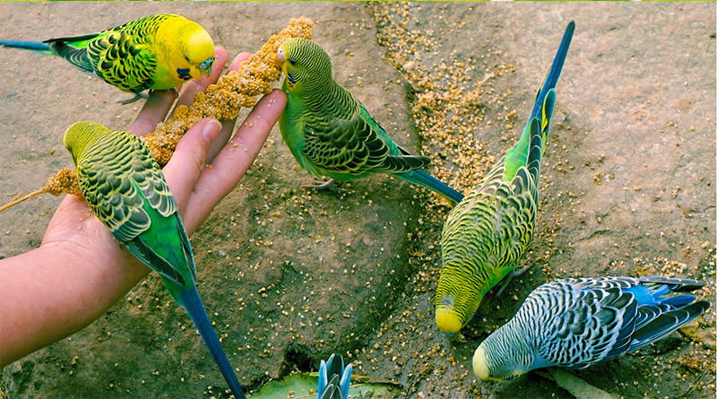 10 highly toxic foods for birds
