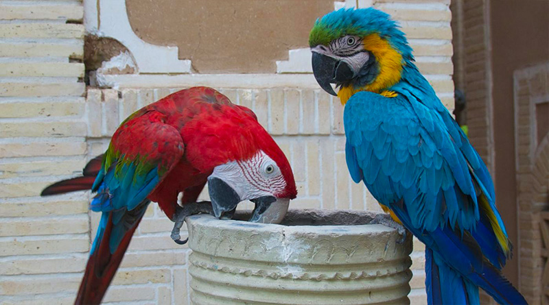 The Healthy Diet of Parrots