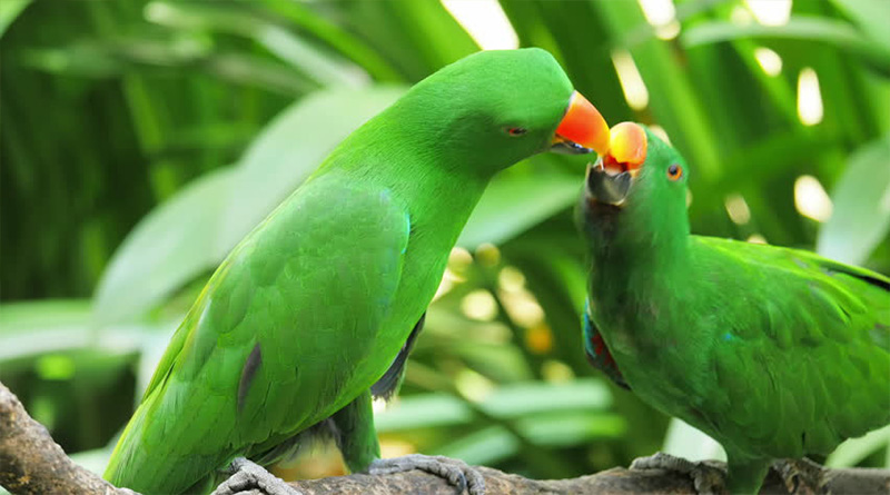 How to Care for a Parrot at Home