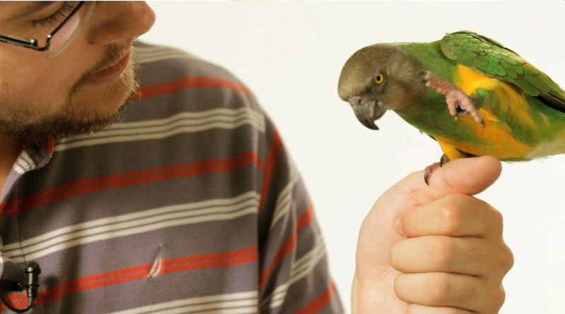 How to teach a Parrot to Speak